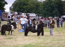 Pony judging