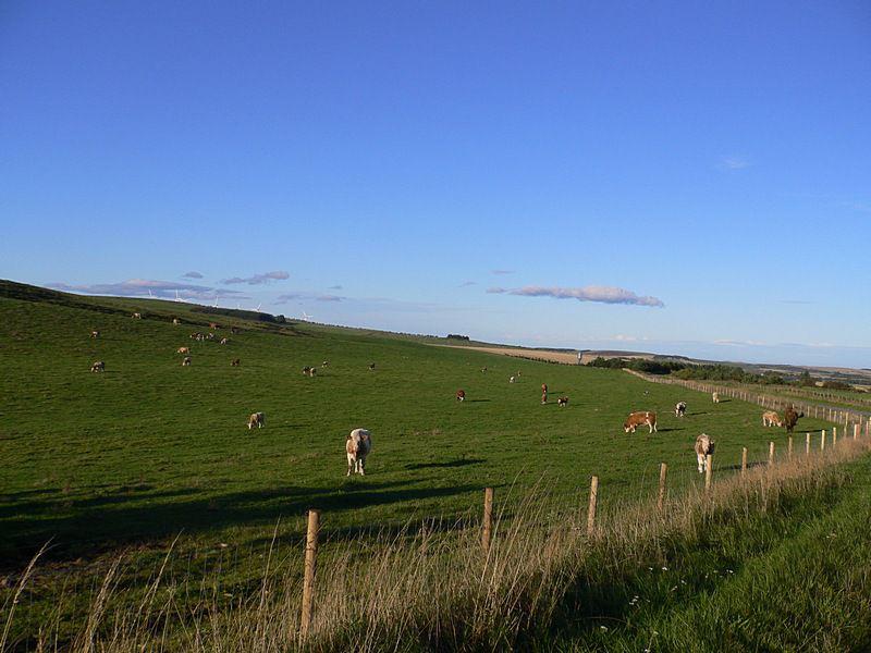 Plenty of grass