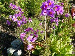 Andrea Sinclair Garden Design